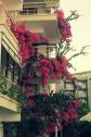 balkonbloemen